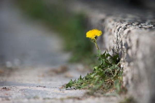 Linh hoạt và thích nghi với mọi hoàn cảnh cũng chính là bí quyết thành công